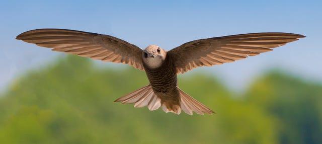 Avistamiento de aves en Alange