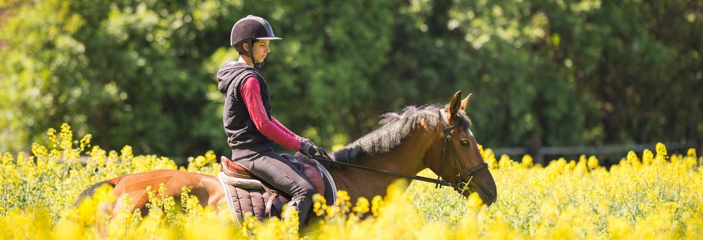 Paseo a caballo por Alcudia