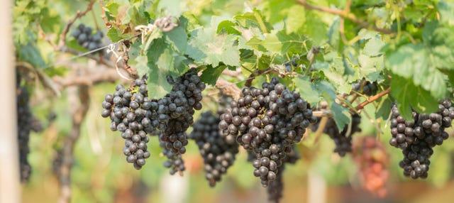 Visita a Vinos Heraclio Alfaro