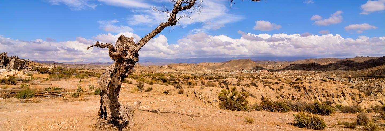 Excursão a Tabernas e Fort Bravo