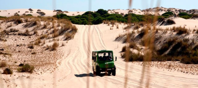 Visita guiada por el Parque Nacional de Doñana
