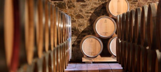 Visita a Viñedos y Bodegas Pittacum
