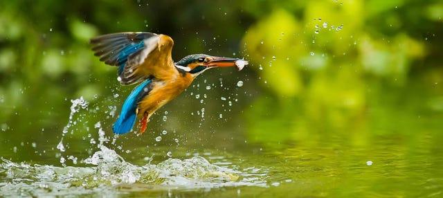 Descenso del Sella con avistamiento de aves
