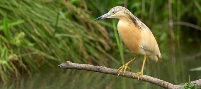 Avistamiento de aves en Badajoz