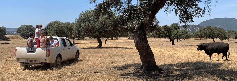Tour do touro de 4x4 por Llanos de Olivenza