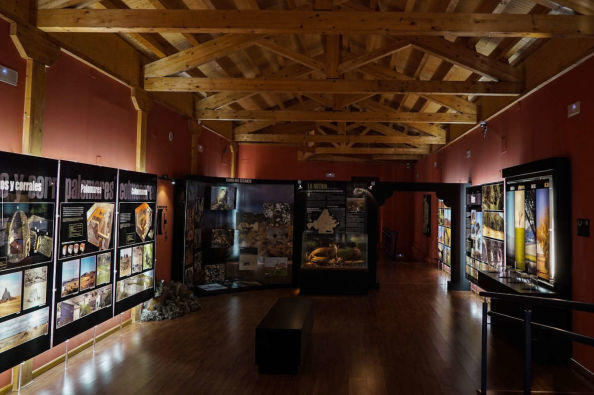 Discover the exhibition