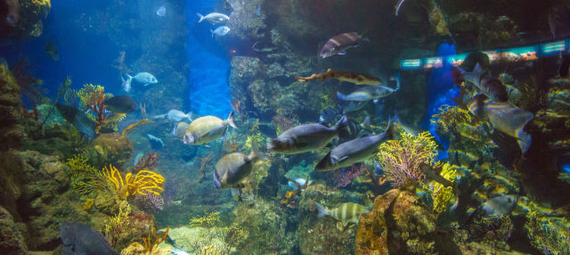 Biglietti per L'Aquarium di Barcellona