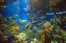 Entrada a L'Aquàrium de Barcelona