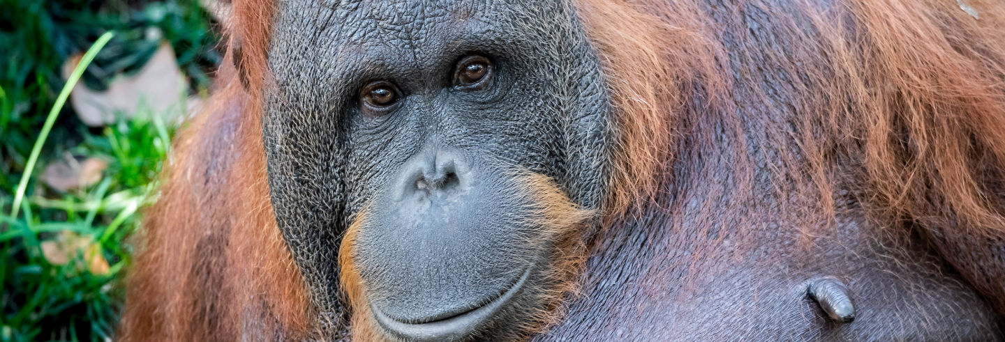 Barcelona Zoo Tickets