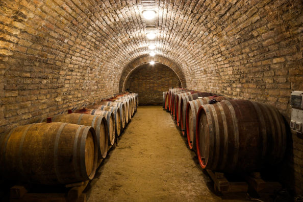Discover the wine cellars