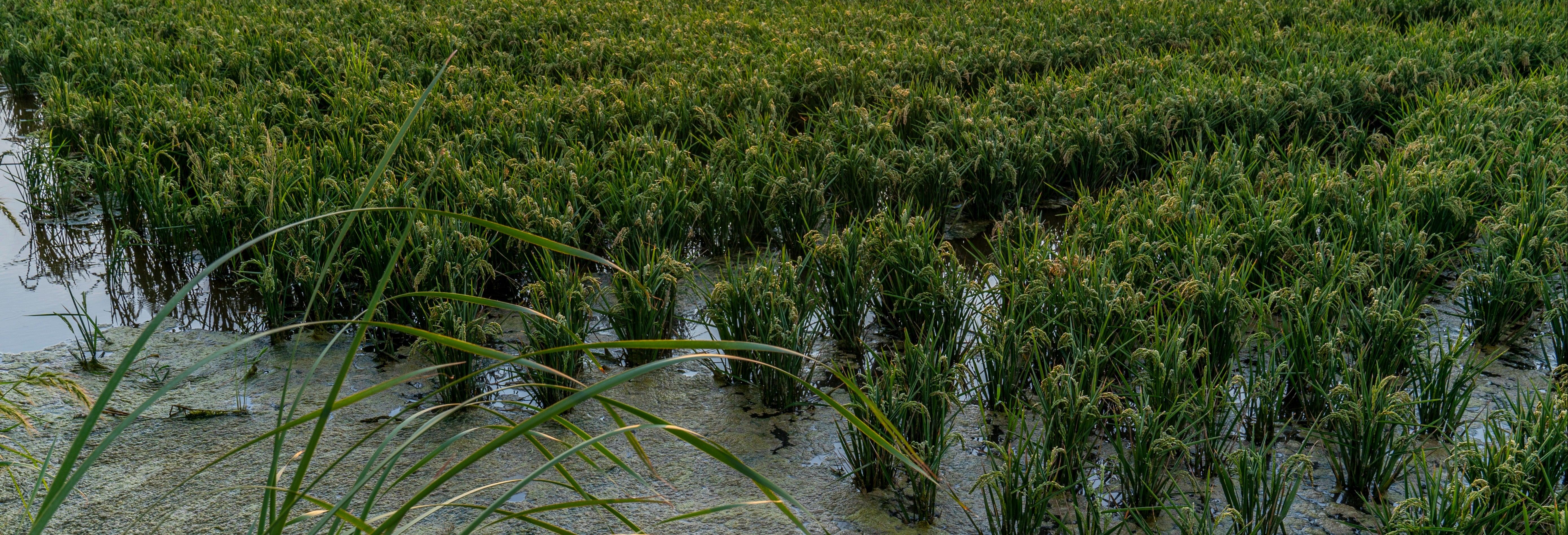 Excursión a Valencia y la Albufera + Campos de chufa