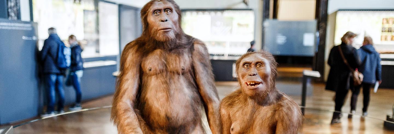 Visita guiada por el Museo de la Evolución Humana