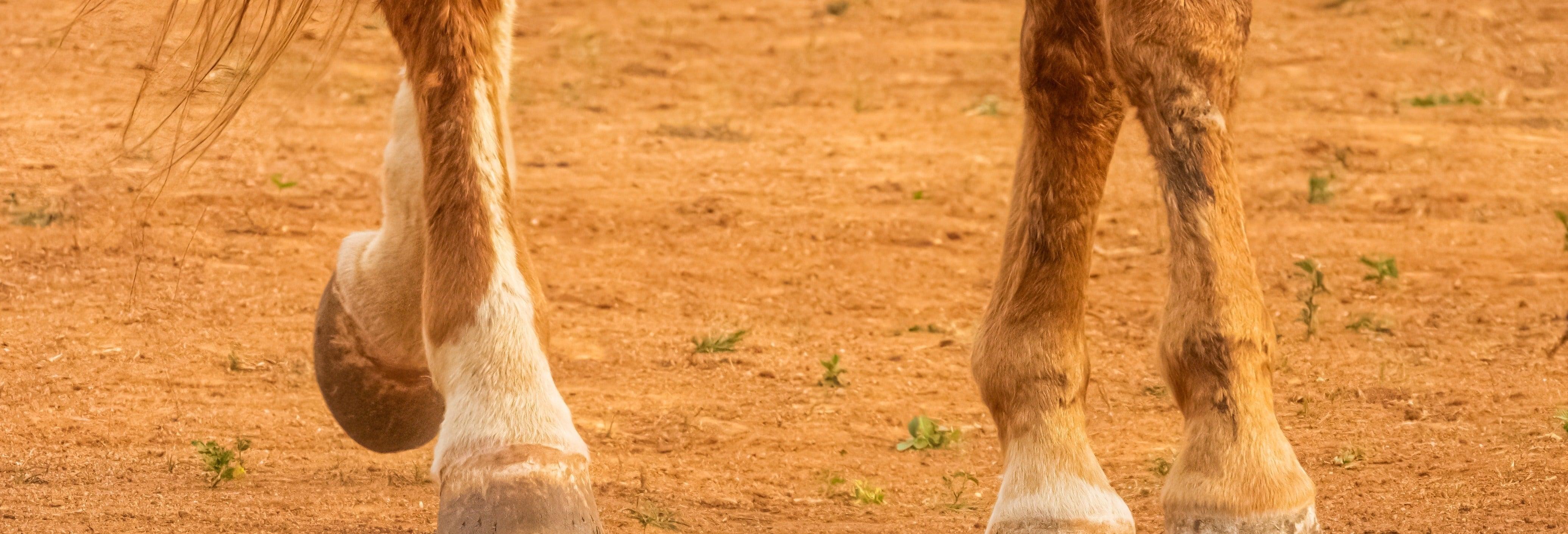 Excursión a caballo por el campo de Cáceres