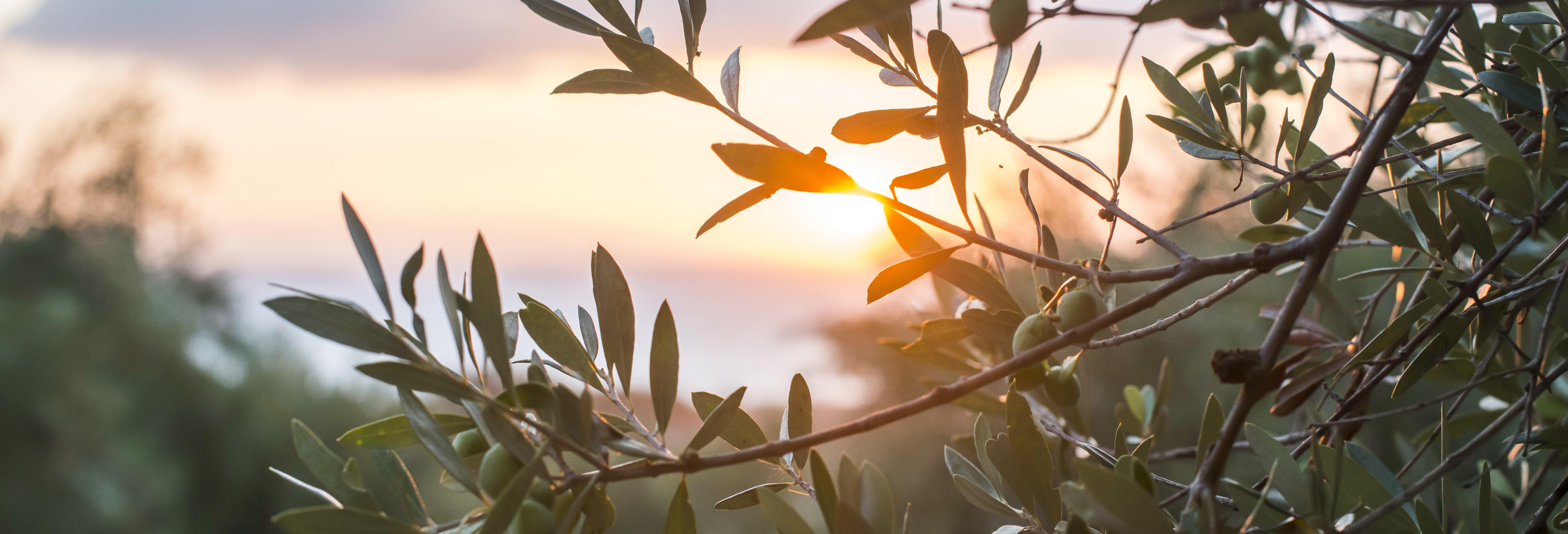 Tour pelos olivais de Carrascalejo + Degustação de azeite