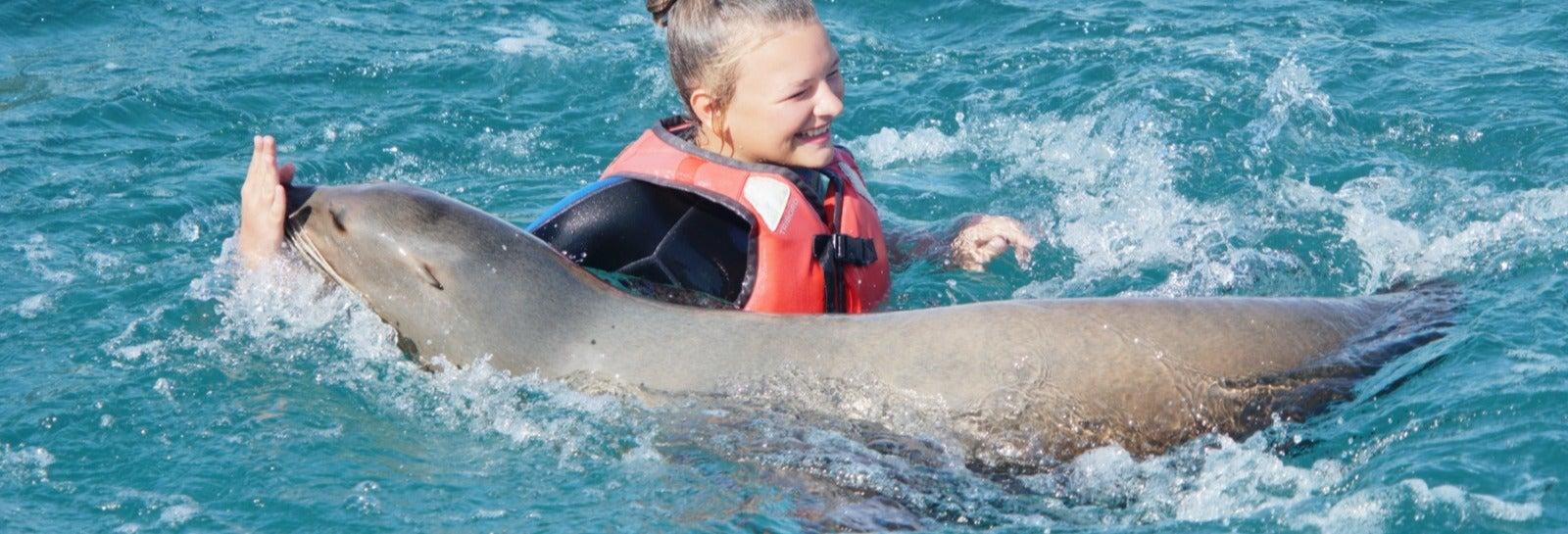 Baño con leones marinos en Caleta de Fuste