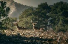 Tour por el Parque de las Sierras de Cazorla, Segura y Las Villas