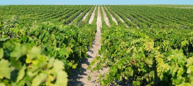 Tour del vino de Jerez
