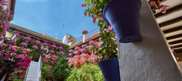 Free tour por los patios de Córdoba