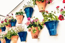 Cordoba Courtyards Guided Tour