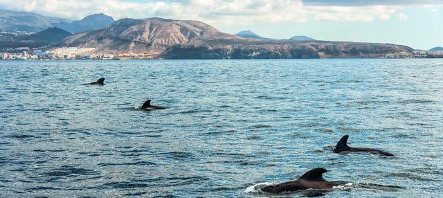 Paseo en velero con avistamiento de cetáceos