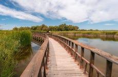 Tour por las Tablas de Daimiel y Laguna de Navaseca