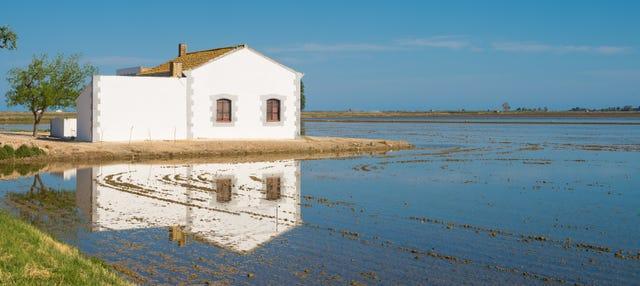 Paseo a caballo por el Delta del Ebro