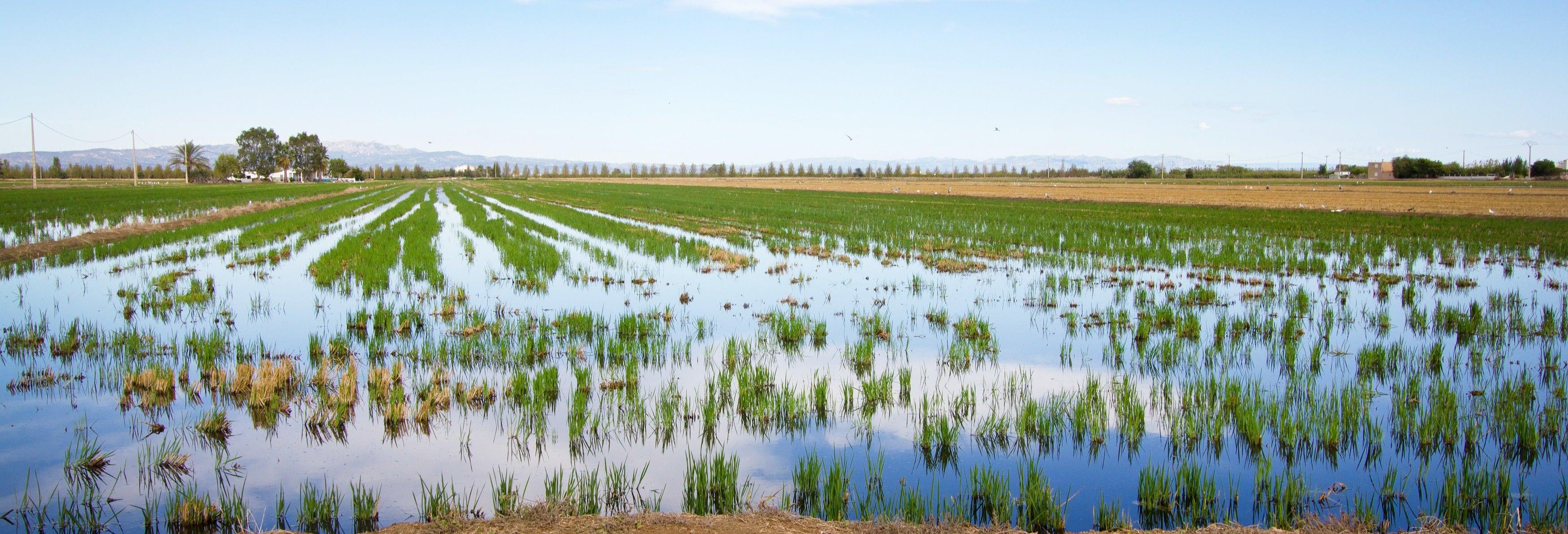 Tour de 4x4 e passeio de barco pelo Delta do Ebro