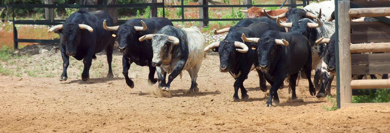 Ruta de toros y vinos por el Condado de Huelva