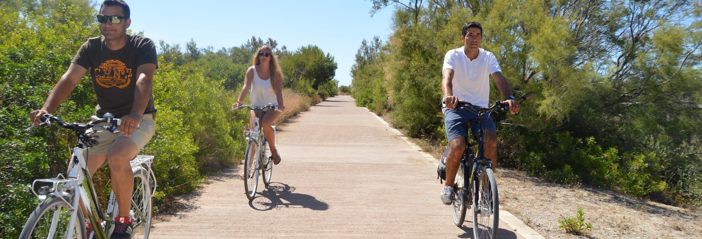 Alquiler de bicicletas en la Albufera