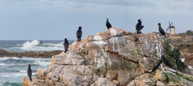 Avistamiento de aves en Foz