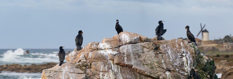 Avistamento de aves em Foz