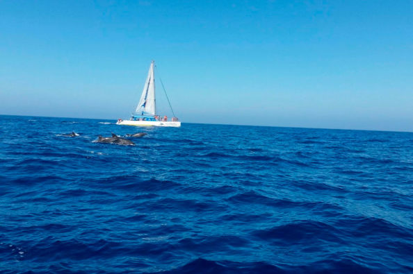 Spotting dolphins from the catamaran