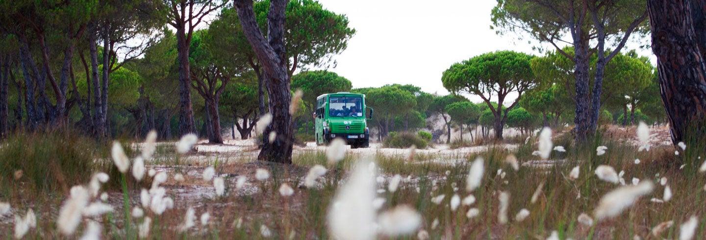 Excursión al Parque Nacional de Doñana