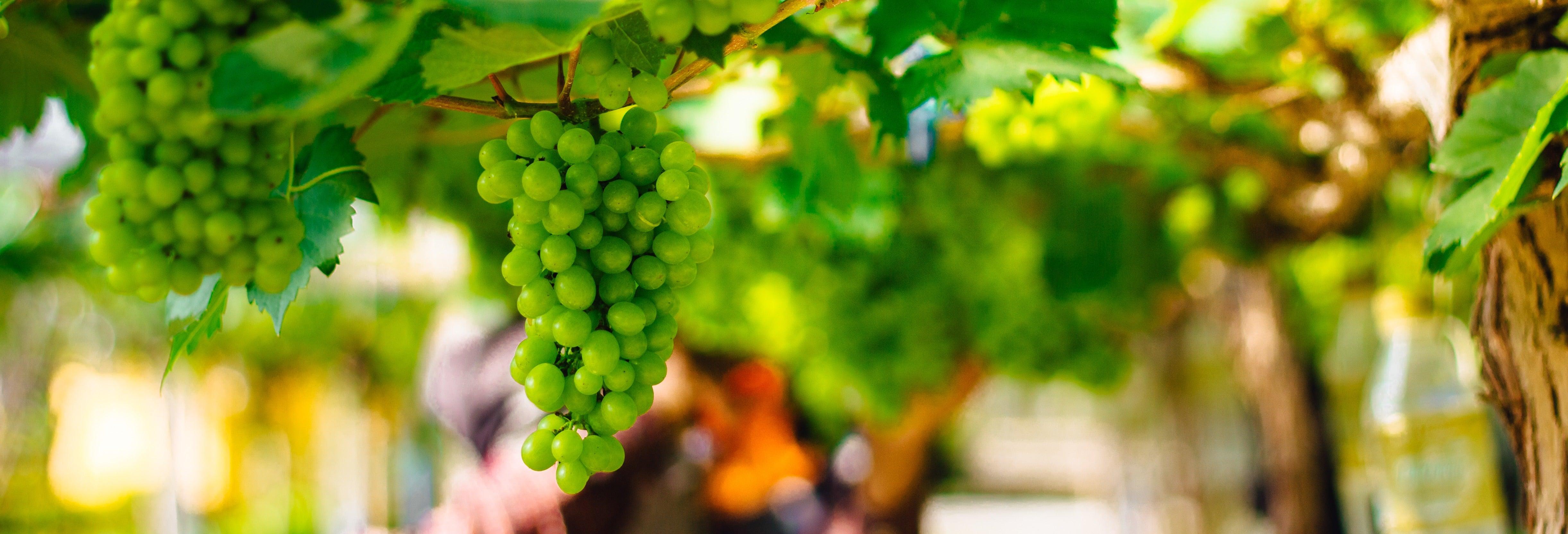 Visite autour de la tauromachie et du vin dans le Comté de Huelva