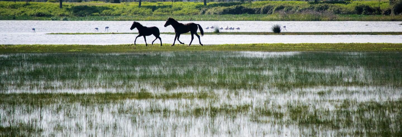 Excursão ao Parque Nacional de Doñana