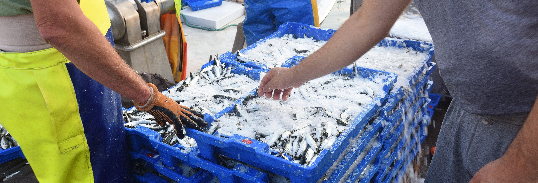 Visita guiada por la lonja de Isla Cristina
