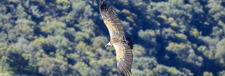 Avistamiento de aves en Monfragüe