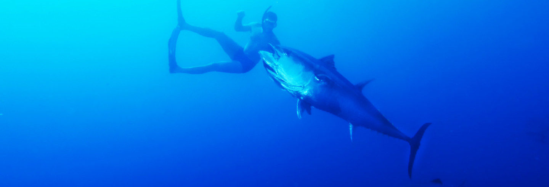 Baño con atunes en La Ametlla de Mar