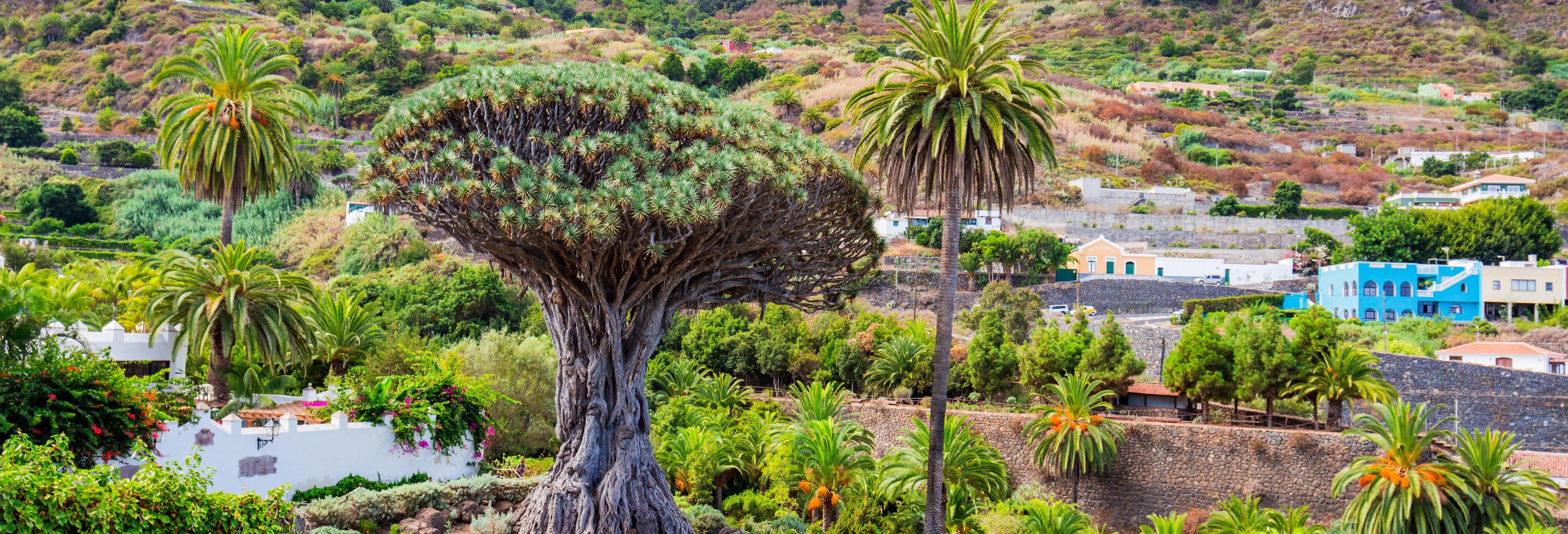 Excursión al Teide, Icod y Garachico desde el sur de Tenerife