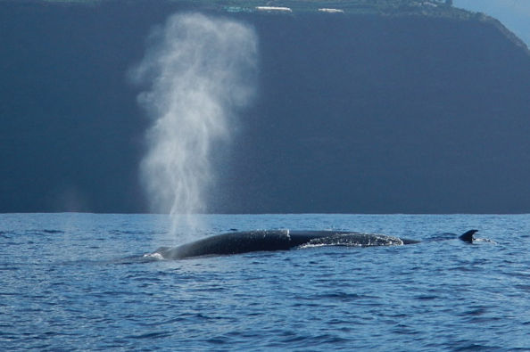 Spotting a whale from the boat