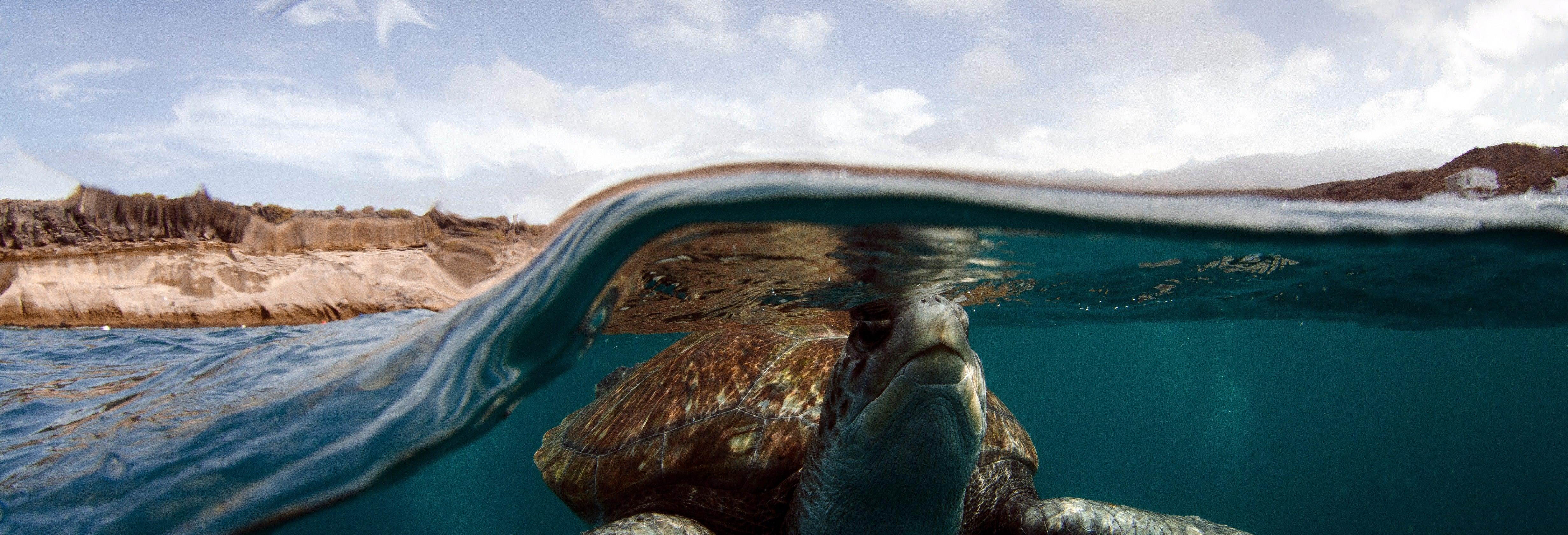 Snorkel con avistamiento de tortugas en Tenerife