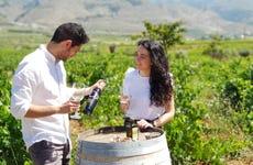 Visita al Cortijo El Cura + Cata de vinos