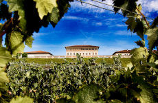 Visita a la bodega Rioja Vega