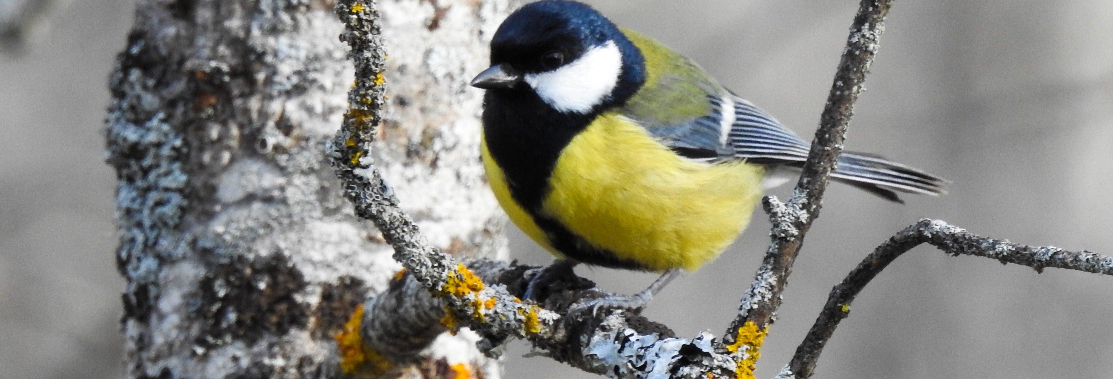 Avistamiento de aves en El Pardo