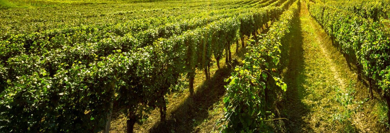 Tour por los viñedos de las bodegas Buezo