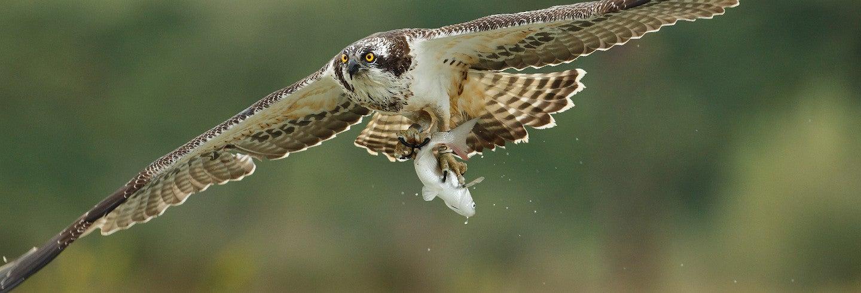 Avistamento de aves na baía de Santander