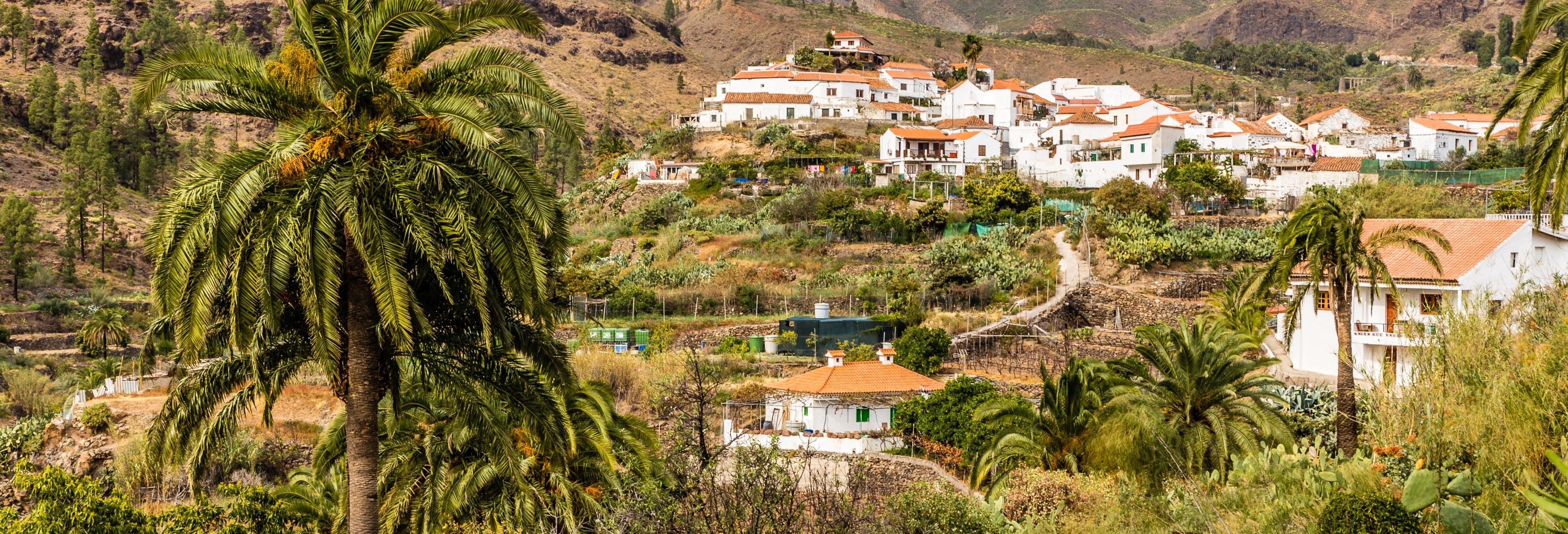 Paseo en camello por el Valle de las Mil Palmeras