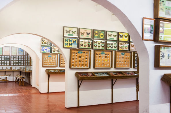 The Natural Science Museum of Menorca