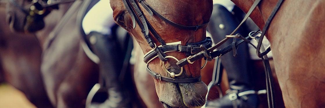 Corridas de cavalos em Menorca