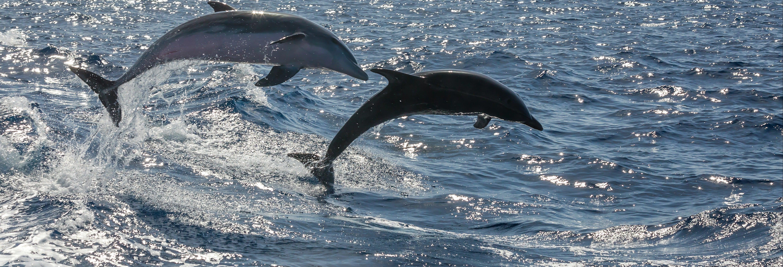 Avistamiento de cetáceos desde Morro Jable